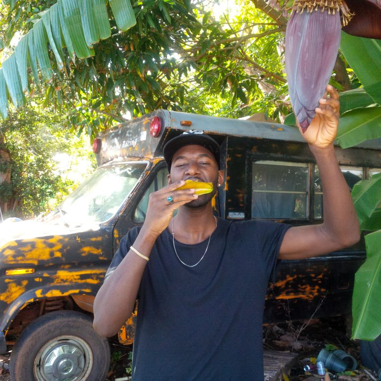 Kauai (Hawaii) Organic Banana Tree | @bychris #myvegandishes